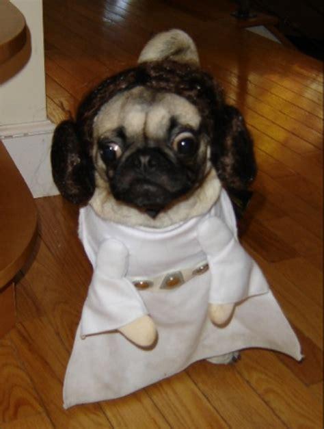 pugs in wars costumes wars pug costume gifs pug jokes
