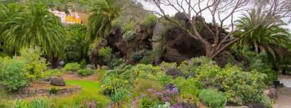 botanical garden jard 237 n bot 225 nico canario viera y clavijo