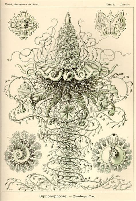 the and science of ernst haeckel multilingual edition books haeckel illustrations evolution illustrated imagined