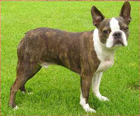 small to medium breeds that don t shed small medium breeds that don t shed simple image gallery