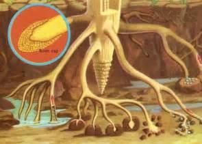 Cape Akar materi ipa sd kelas iv bagian bagian tumbuhan dan