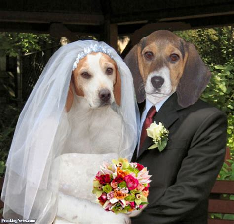 puppy wedding beagle wedding pictures freaking news