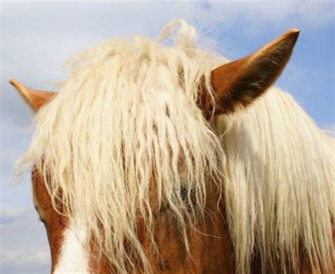 wann wachsen backenzähne pixwords das bild mit pferd kopf tier ohren raomn