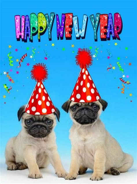 new year pug 1000 images about new years on happy new year happy new year 2016 and