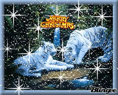 merry christmas white tigers picture  blingeecom