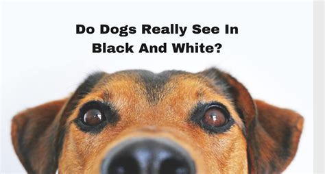 do dogs see in color do dogs really see in black white best