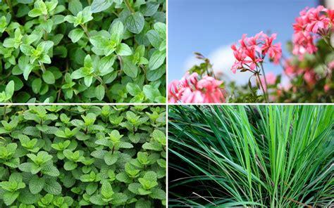 eliminare zanzare giardino come eliminare le zanzare dal giardino oknoplast