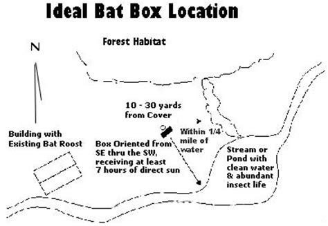 bat box location instructions picture