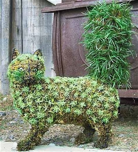 how to make your own topiary frames 77 best images about cat friendly garden on