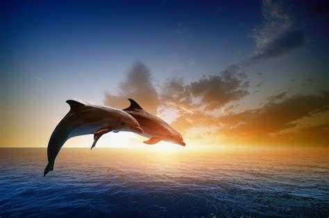 imagenes para fondo de pantalla delfines bellos fondo pantalla celular gratis frases de buenos d 237 as