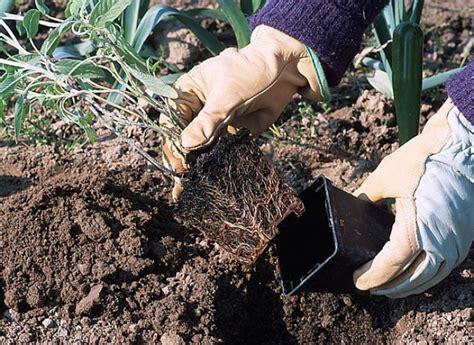Planter En Juin by Que Faire Au Potager En Juin