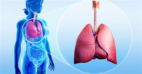 How To Detox Your Lungs After Quitting by How To Detoxify Your Lungs After Quitting Smoke