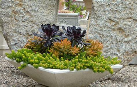 planters for succulents sedum and succulent planters the garden glove