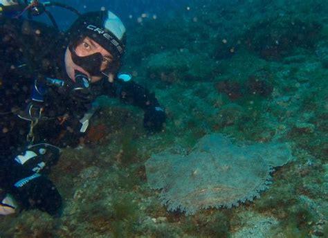 dive sicily snorkeling picture of taormina diving center giardini