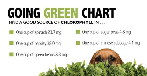 can dogs eat kidney beans go green team dogs naturally magazine
