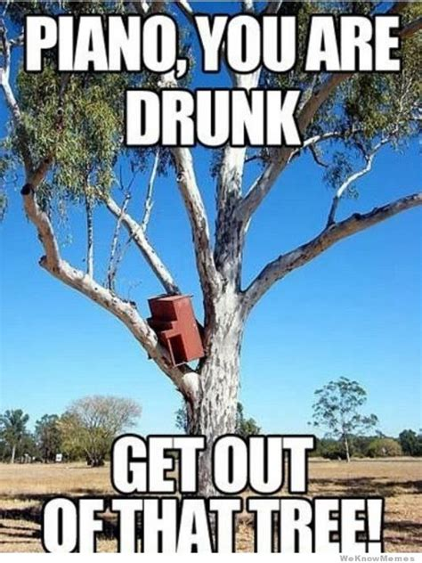 Piano Meme - piano you are drunk get out of that tree weknowmemes