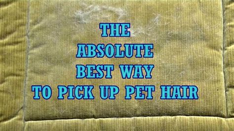 Best Way To Get Pet Hair by The Best Way To Remove Pet Hair Is With This Common Thing