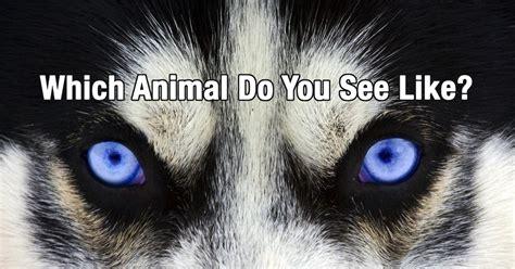 quiz  animal     newegy