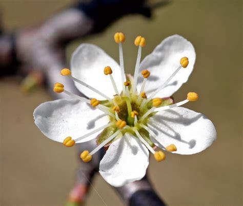 fiori febbraio in edicola dal 23 febbraio casa in fiore di marzo cose