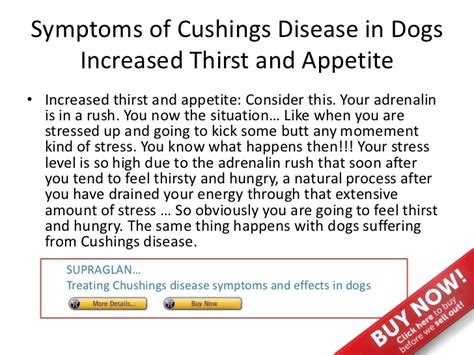 cushing s disease dogs symptoms symptoms of cushings disease in dogs