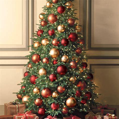 choose and plant a live christmas tree outdoortheme com
