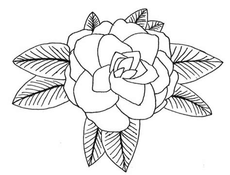 coloring page of hawaii s state flower hawaii state flower coloring page pictures reference
