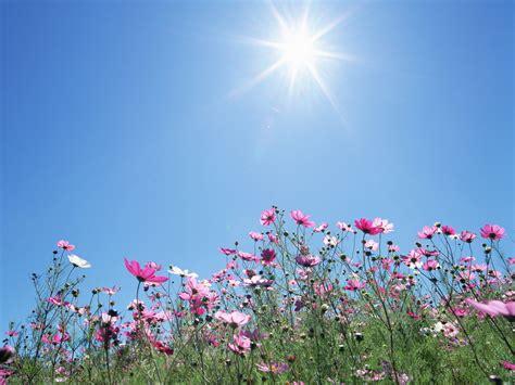beneath the summer sun an every amish season novel books 鲜花壁纸之一阳光花卉 壁纸 桌面 精美壁纸