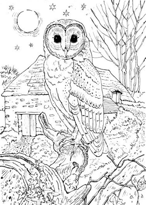 free owl coloring pages for adults owl coloring pages owl coloring pages for adults