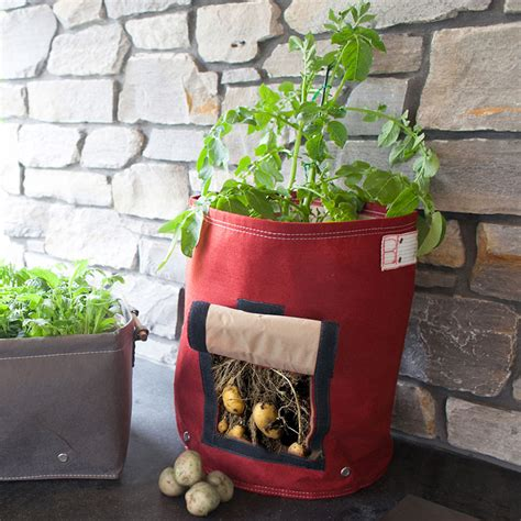 Potato Planter By Planter Bag by Bloembagz Potato Planter The Green