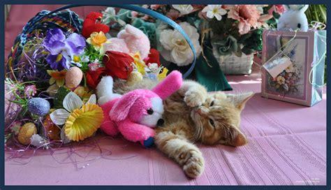 cat easter wallpaper cute easter kitty cat kitten in home garden art decor with