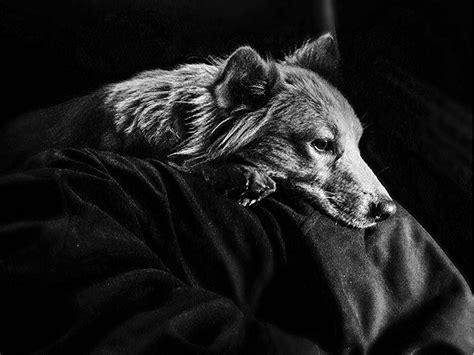 imagenes del zika en blanco y negro tutorial 191 c 243 mo tomar una buena fotograf 237 a a blanco y