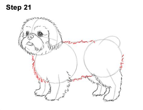 how to draw a shih tzu step by step how to draw a shih tzu