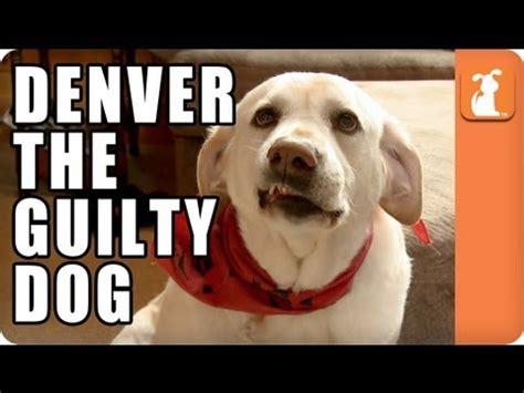 denver guilty denver the guilty memed