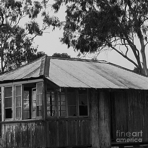 a house among the trees home among the gum trees photograph by therese alcorn