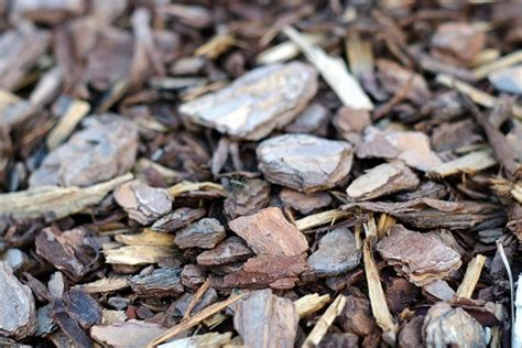 the five most popular types of mulches garden diy
