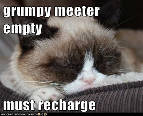 Grumpy Cat Sleep Meme - 1000 images about sleepy grumpy cat on pinterest grumpy