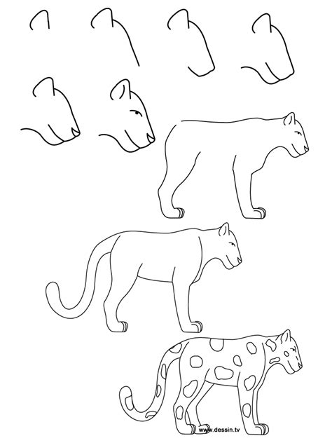 step step animal drawings step by step how to draw simple learn