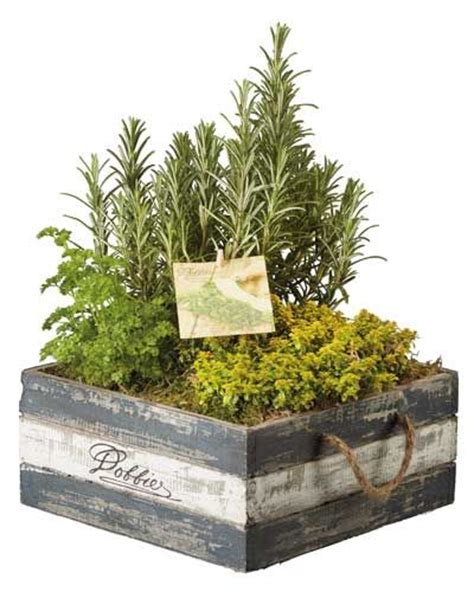 indoor herb gardens indoor herb garden indoor herb garden pinterest