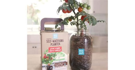 affordable self watering planter lets you grow a countertop garden affordable self watering planter lets you grow a