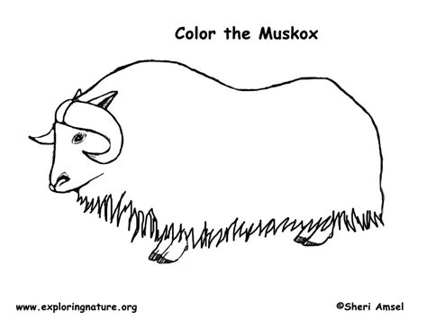Musk Ox Coloring Page Ox Coloring Page