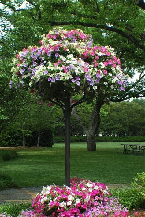 petunias trees and tree planters on pinterest