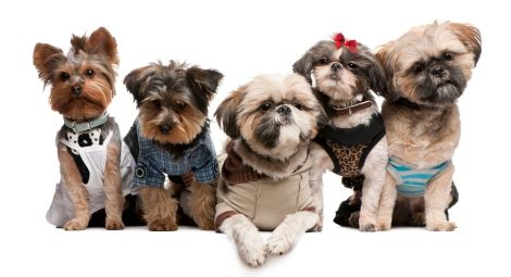 yorkies for sale in sioux falls sd doogooders quot they doo poo quot sioux falls sd