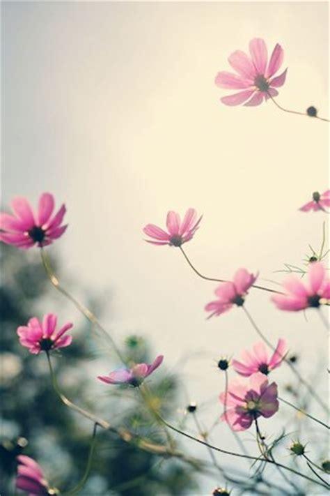 imagenes para celular flores banco de im 225 genes para ver disfrutar y compartir 25