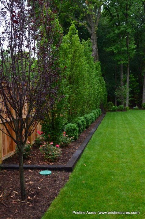 Best Backyard Trees by Best Landscaping Along Fence Ideas On