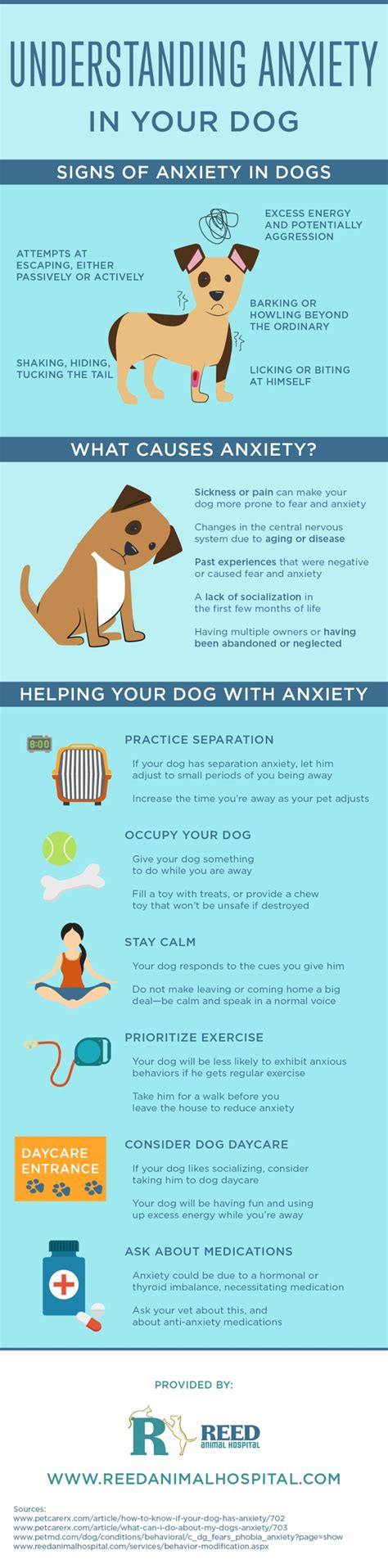 anti anxiety meds for dogs understanding anxiety in your reed animal hospital