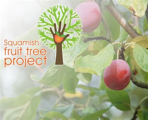 fruit tree project fruit tree project squamish can