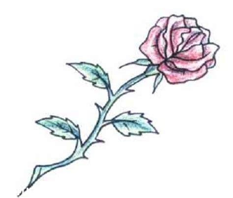 Imagenes De Rosas Con Espinas   dibujos de rosas con espinas a lapiz graffiti tattoo