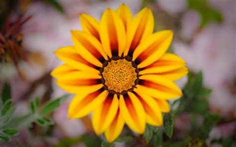 pretty plant jeffrey friedl s blog 187 photographer s low hanging fruit