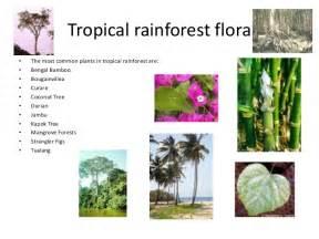 Tropical Grassland Plants List - biomes