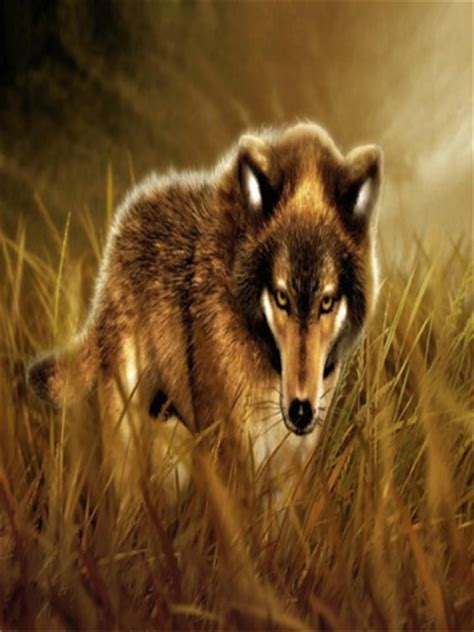 wolves wallpapers app  ipad iphone photo video